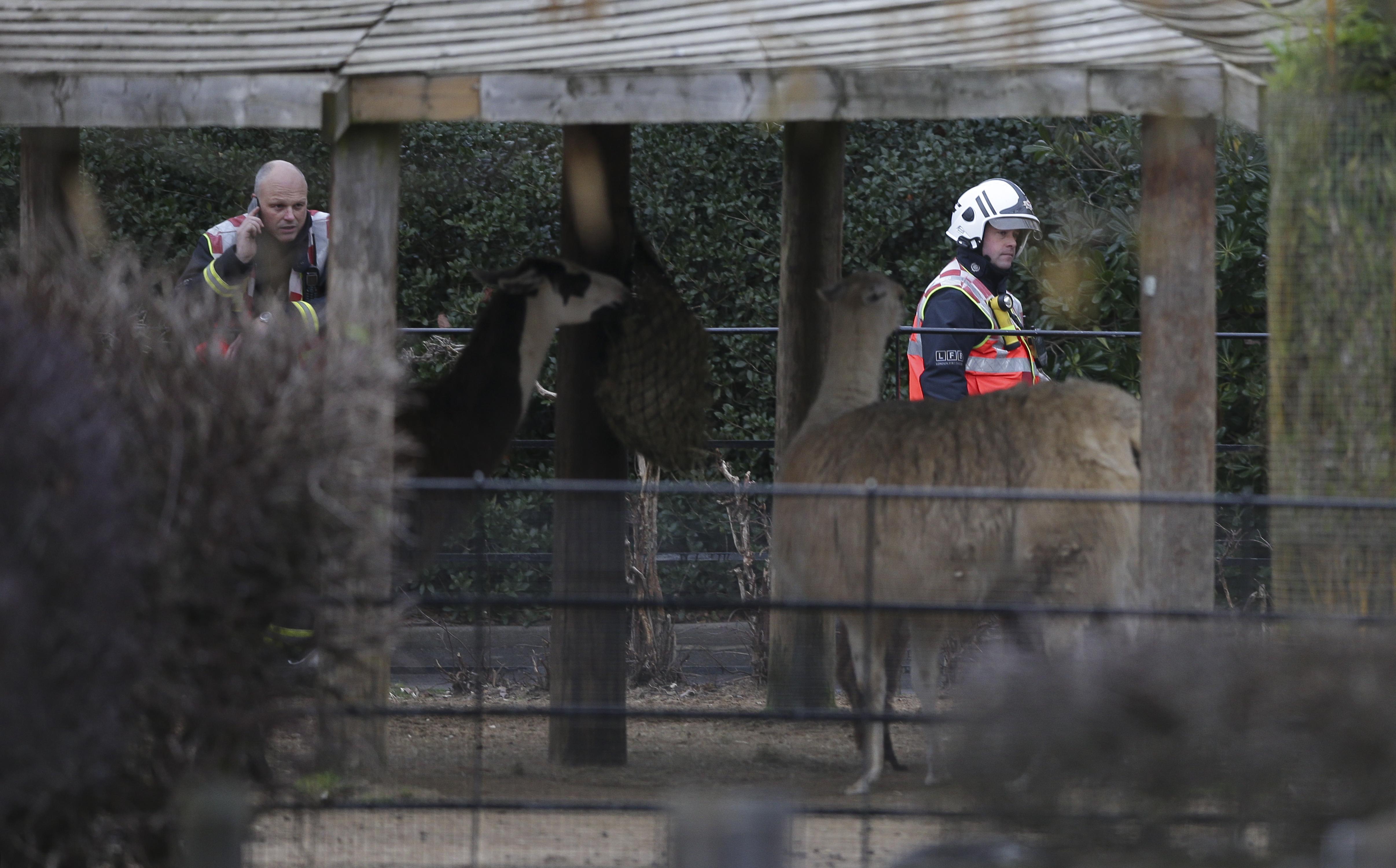 Tűzvész a londoni állatkertben, egy földimalac elpusztult, négy szurikátának nyoma veszett