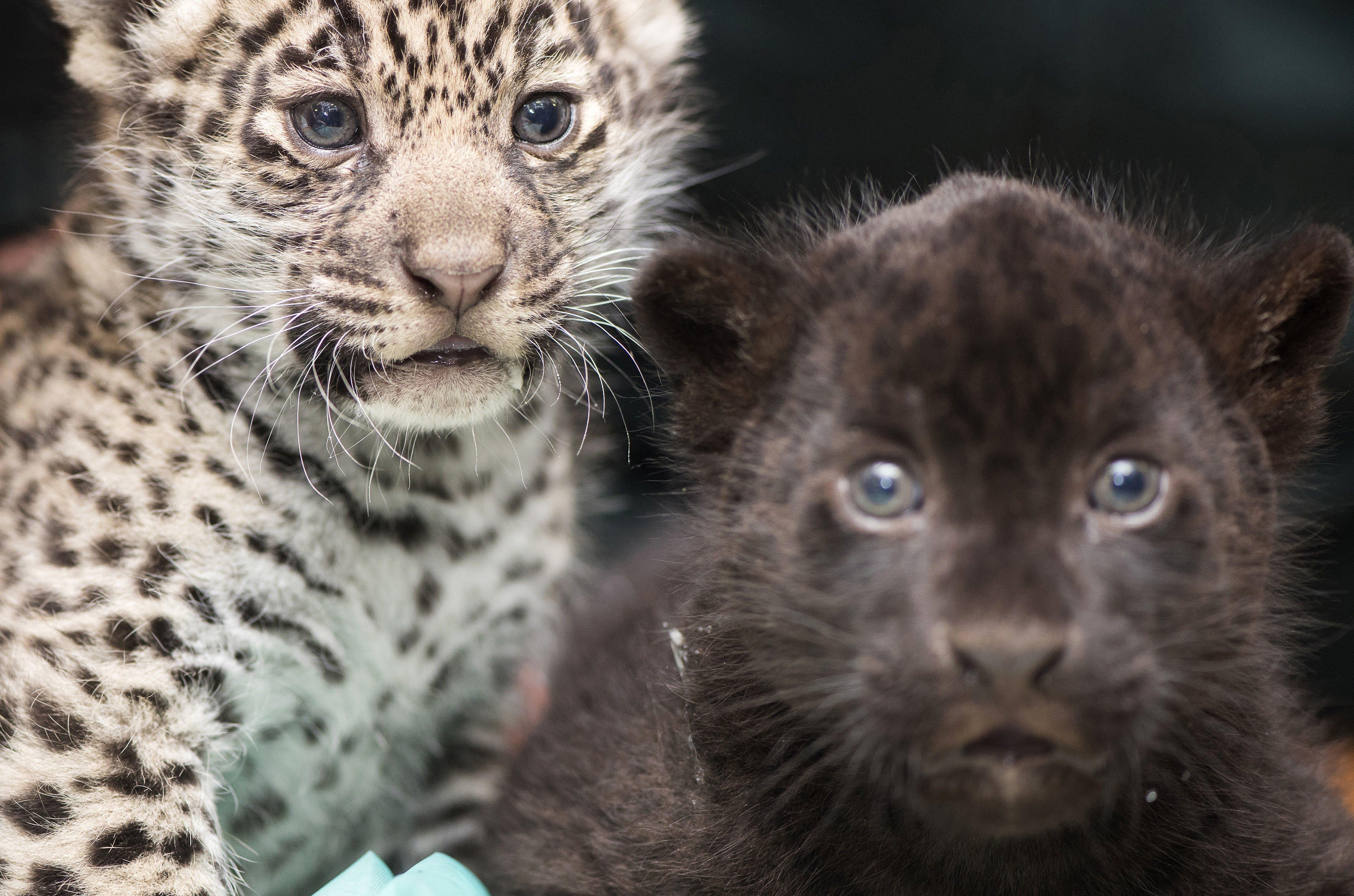 Tíz vándorló állatfaj kaphat nagyobb védelmet a vadászattal szemben