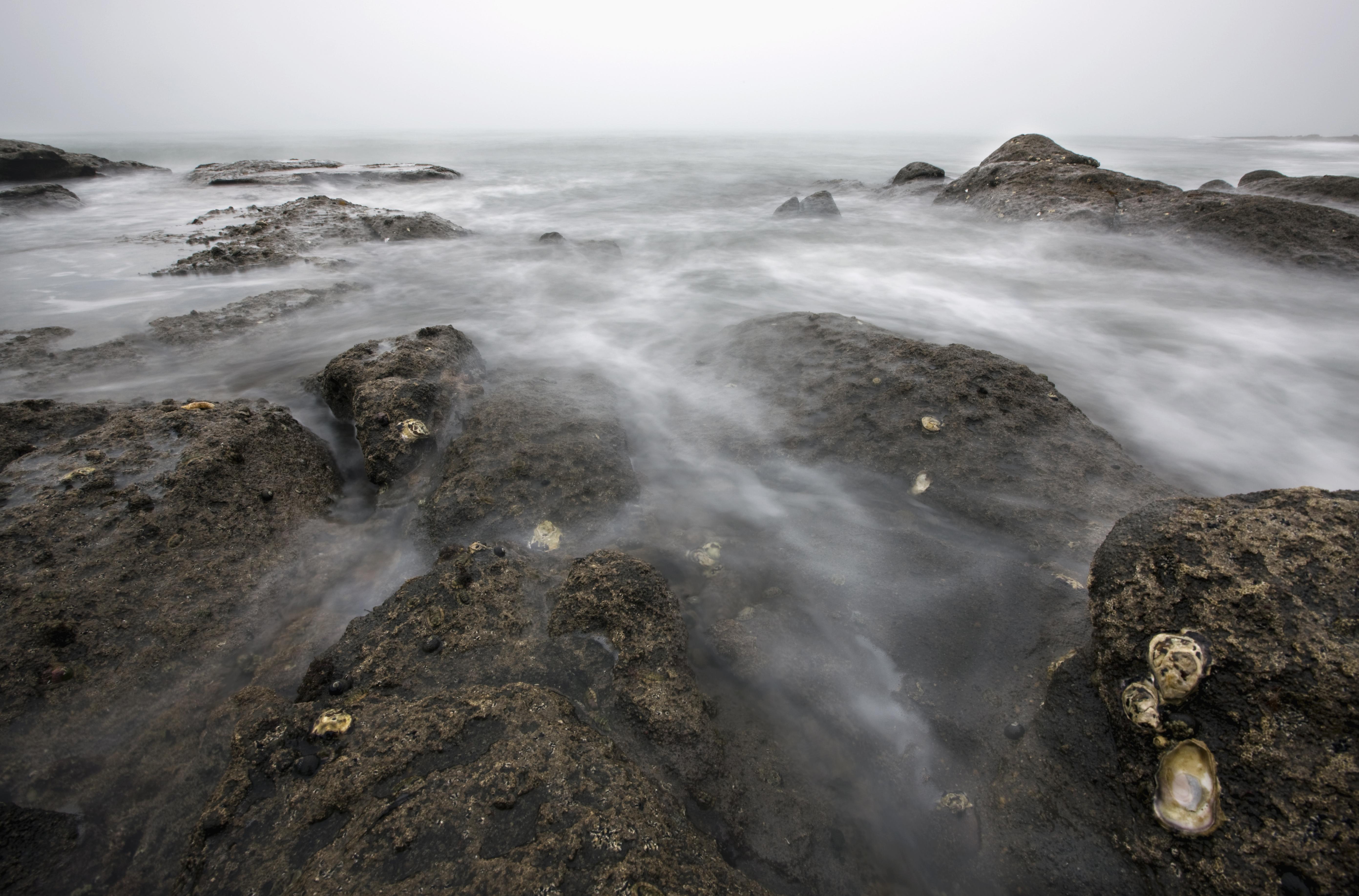 Egy új-zélandi kormányzati oldalon nyomon lehet követni, éppen melyik strandot lepte el a szar