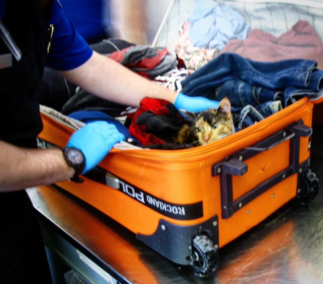 A poggyászban találták meg egy utas macskáját