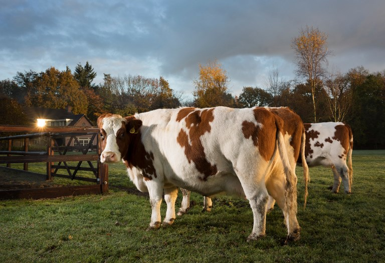 Szaros füvet legelő szarvasmarhákhoz hasonlította az ellenzékre szavazókat a szekszárdi fideszes
