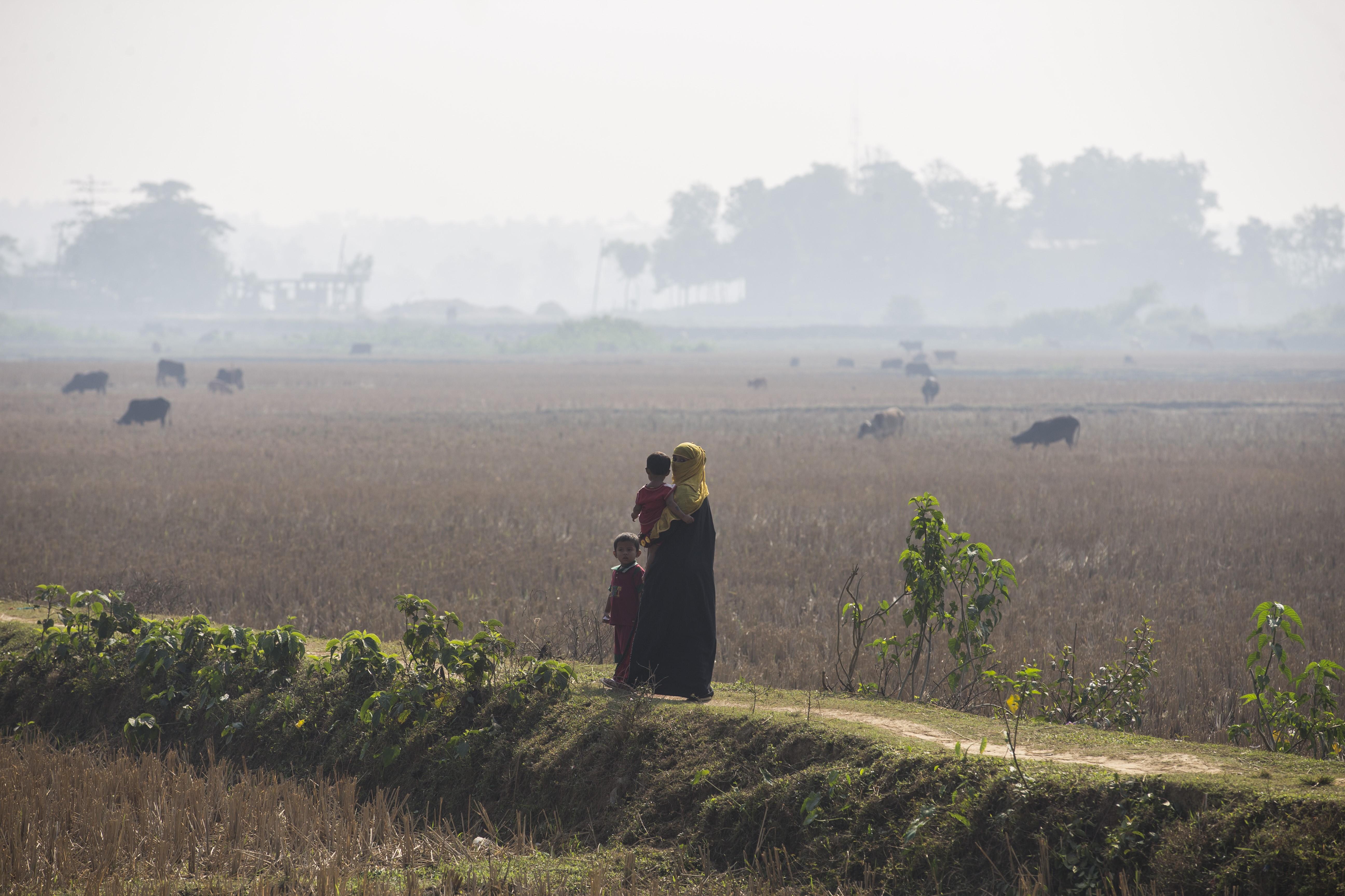 A mianmari kormány buldózerekkel tünteti el a rohingya tömegsírokat