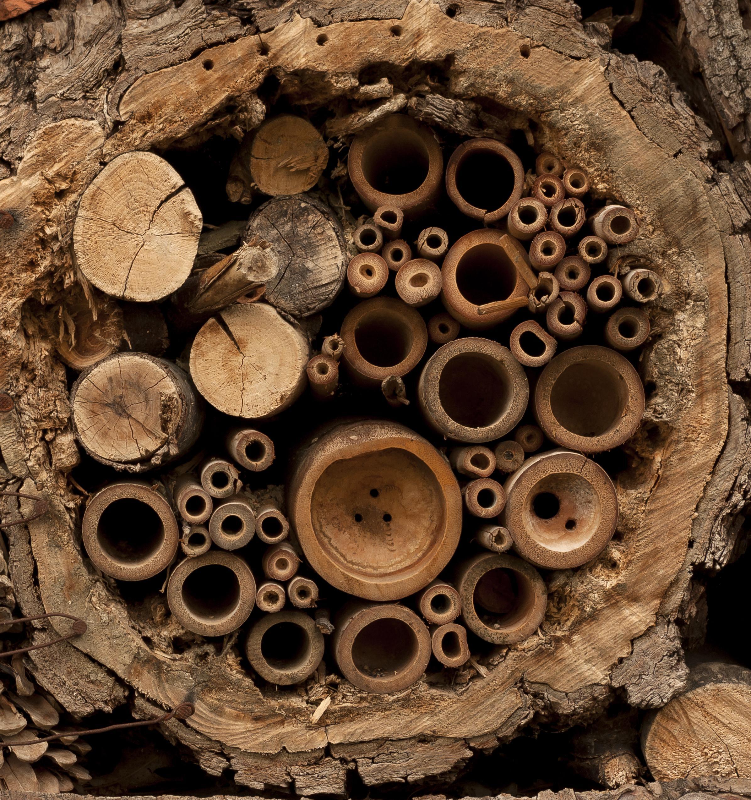 """A Madártani Egyesület """"méhecskehotelek"""", """"darázsgarázsok"""" elhelyezésére biztat"""