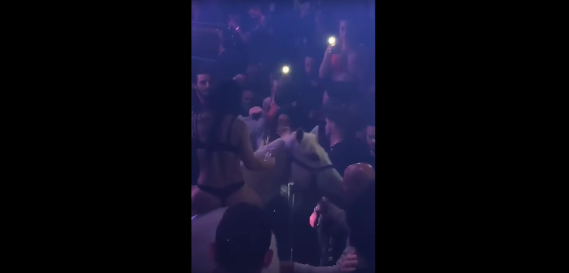 Belovagolt a tánctérre egy nő egy amerikai diszkóban, a tömeg sikítozni kezdett, a ló ledobta a hátáról