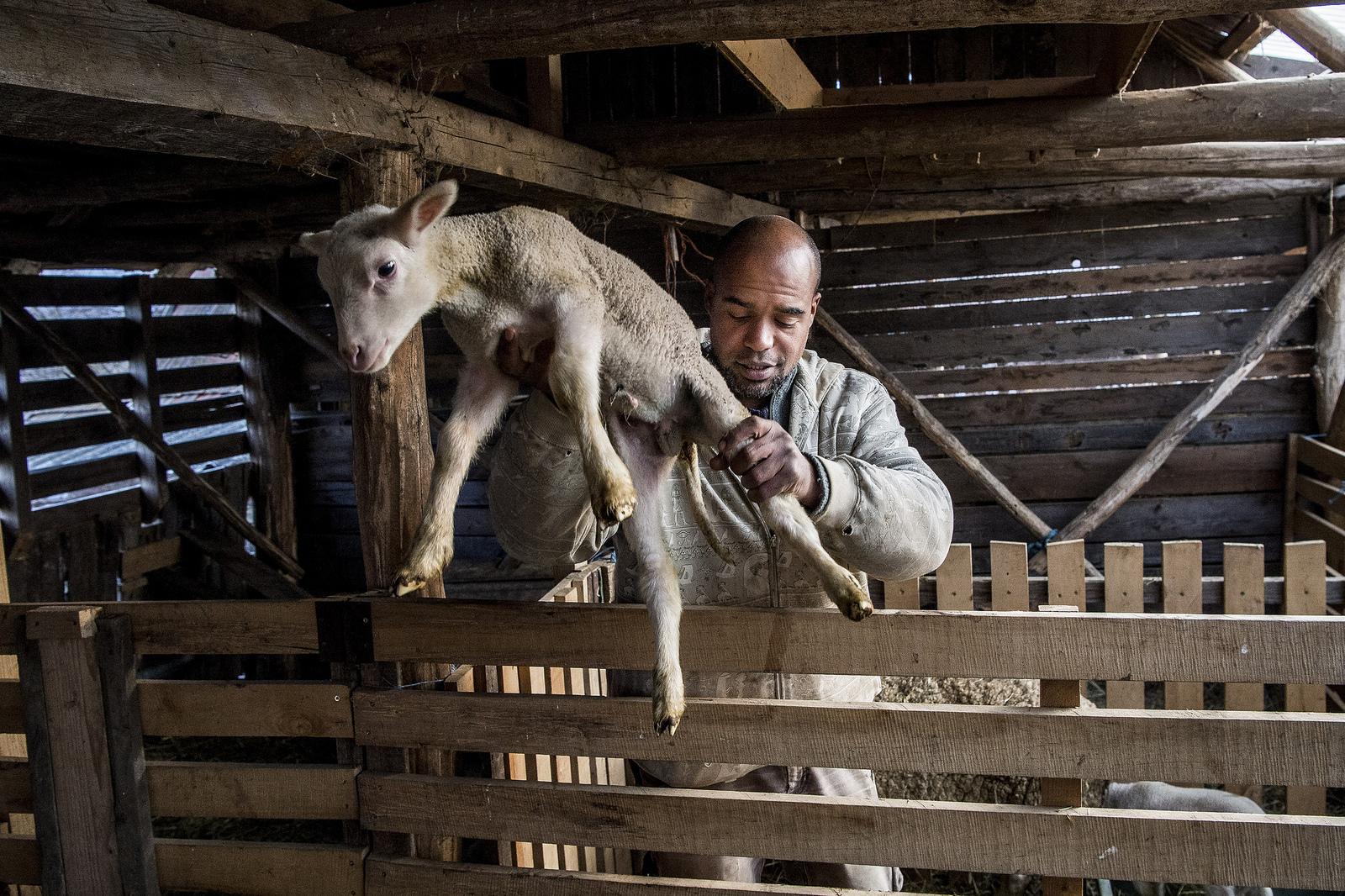 A guineai férfi, aki kecskesajtot készít Almáskeresztúron
