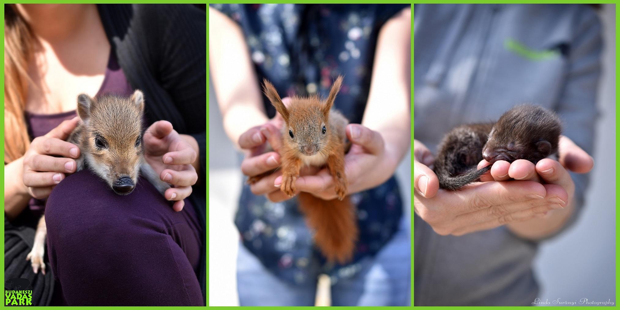 Kezdenek megtelni az állatárvaházak a hülye túrázók miatt