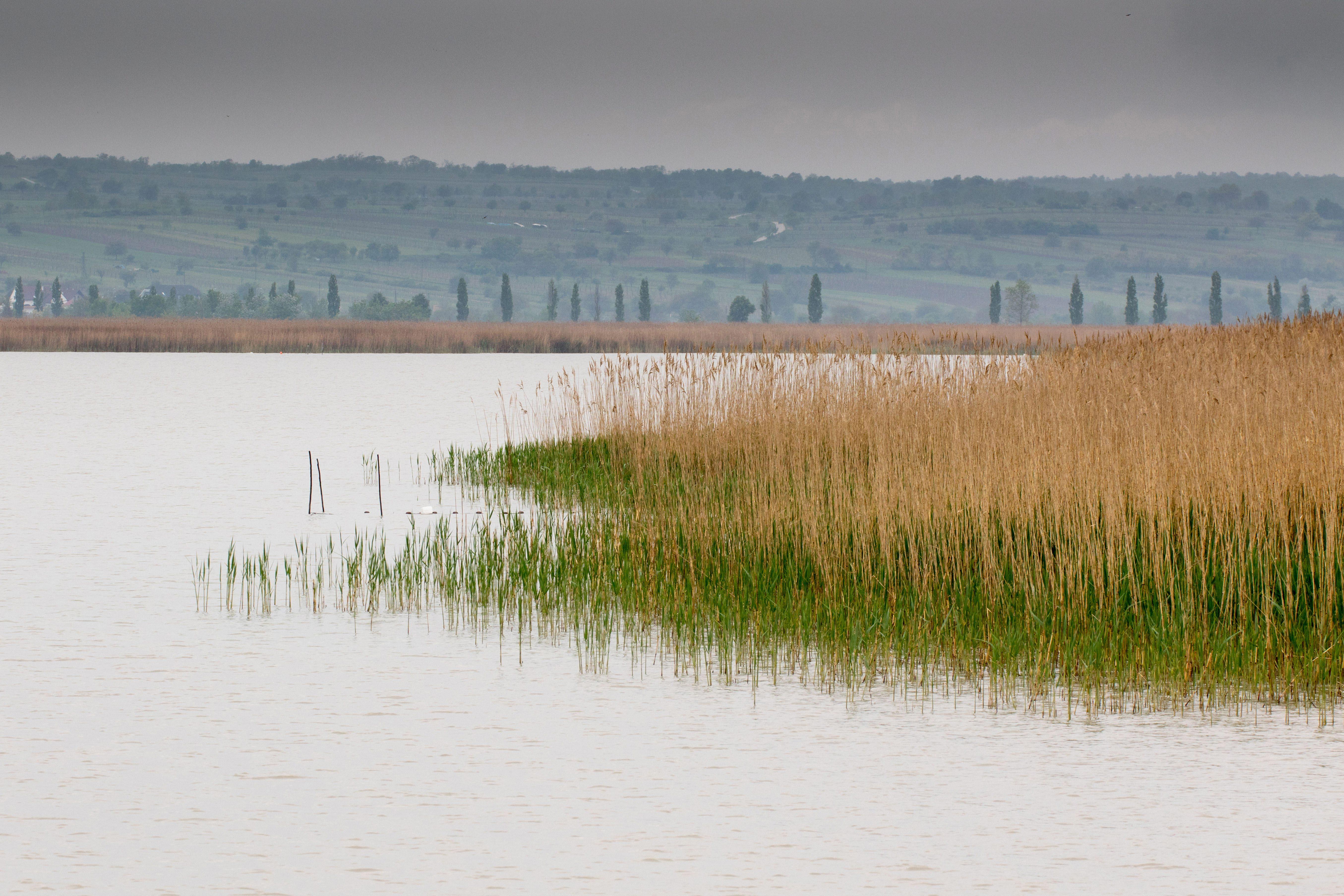 DNS-vizsgálat tisztázhatja, kinek a holttestét találták meg a Fertő-tóban