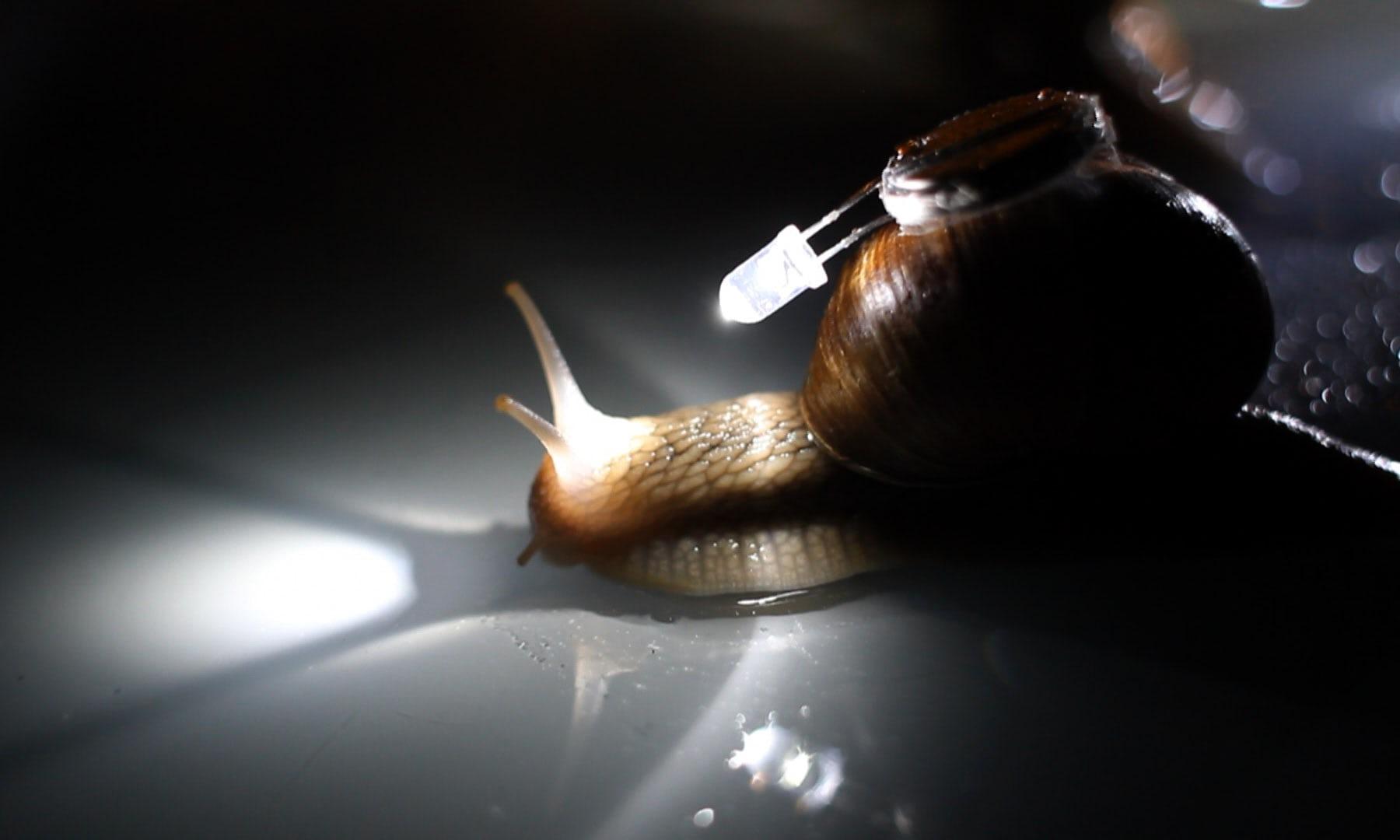 Itt a balett, amiben 176 csiga hat órán át a házán egy apró lámpával csúszkál felalá a sötétben