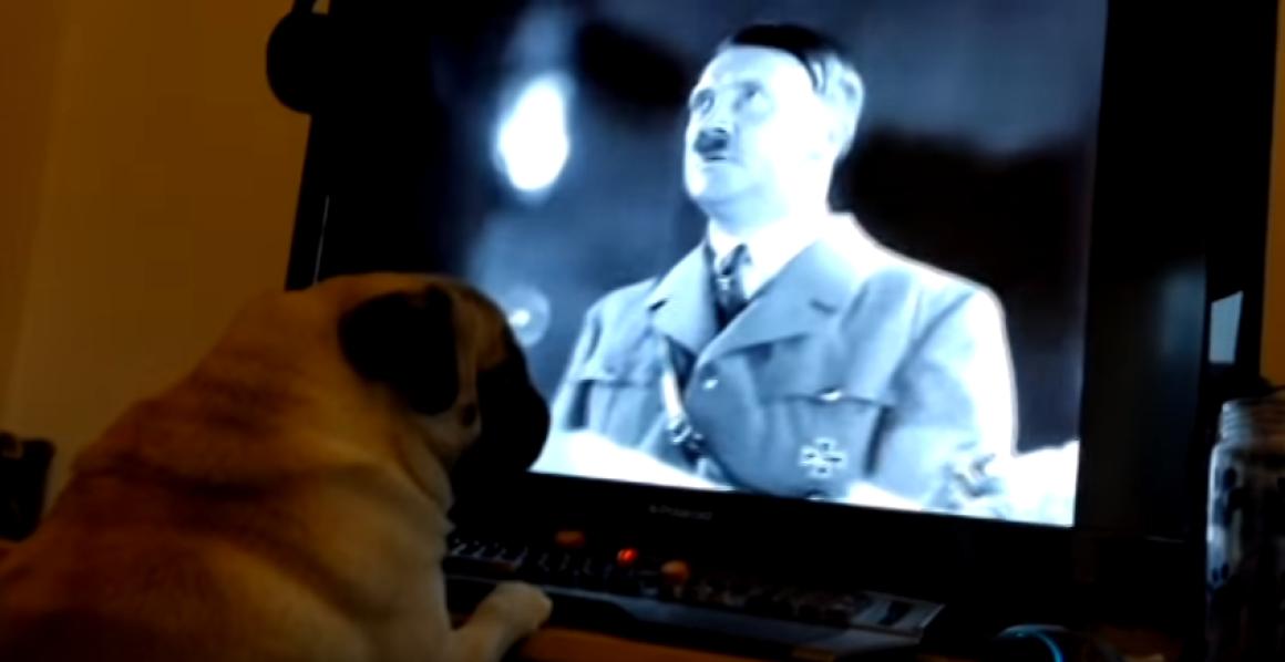 800 fontra büntették végül a nője kutyáját náci mancslendítésre betanító tréfamestert