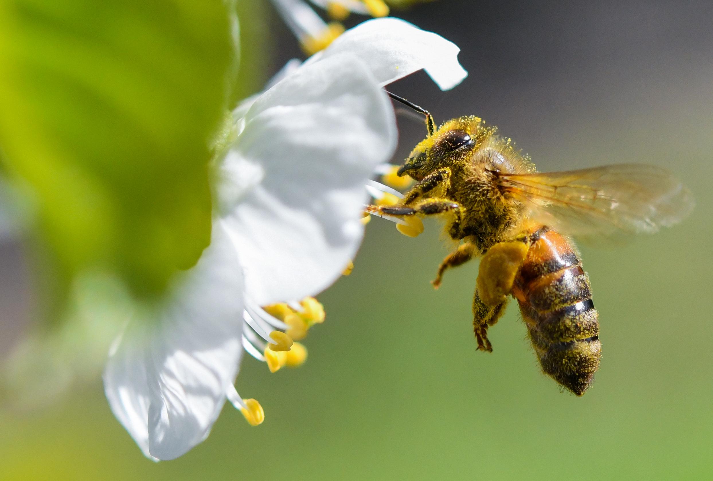 December 19-től már csak üvegházakban használhatják a méheket is irtó neonikotinoidokat