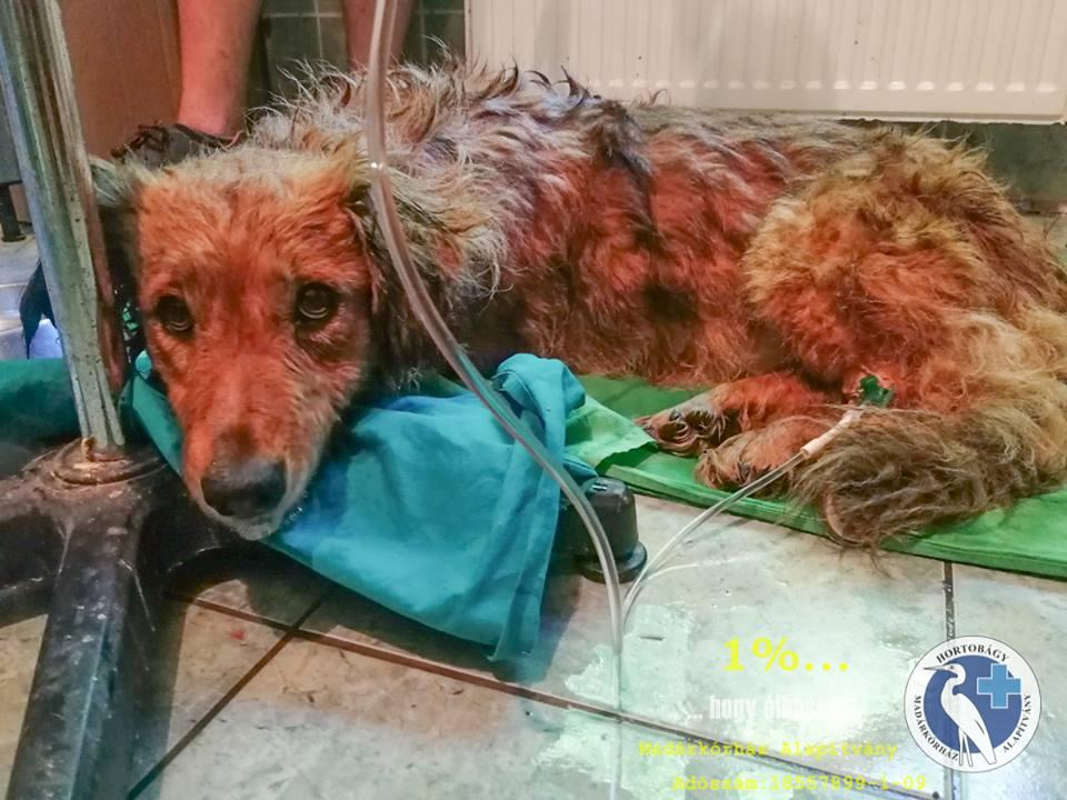 A Hortobágyi Madárkórház dolgozói mentettek meg egy felforrósodott autóban haldokló kutyát