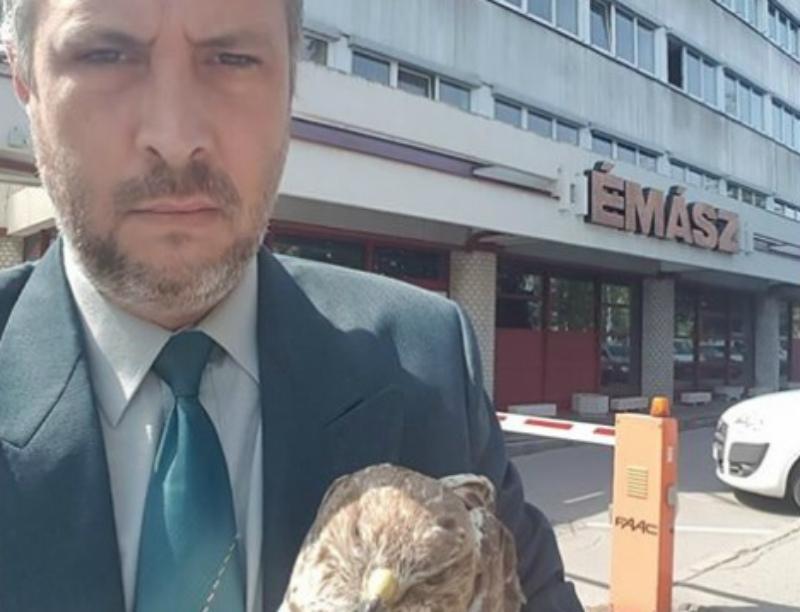 Elege lett a madármentőnek, megnyomorított ölyvvel a kezében sétált be az áramszolgáltatóhoz