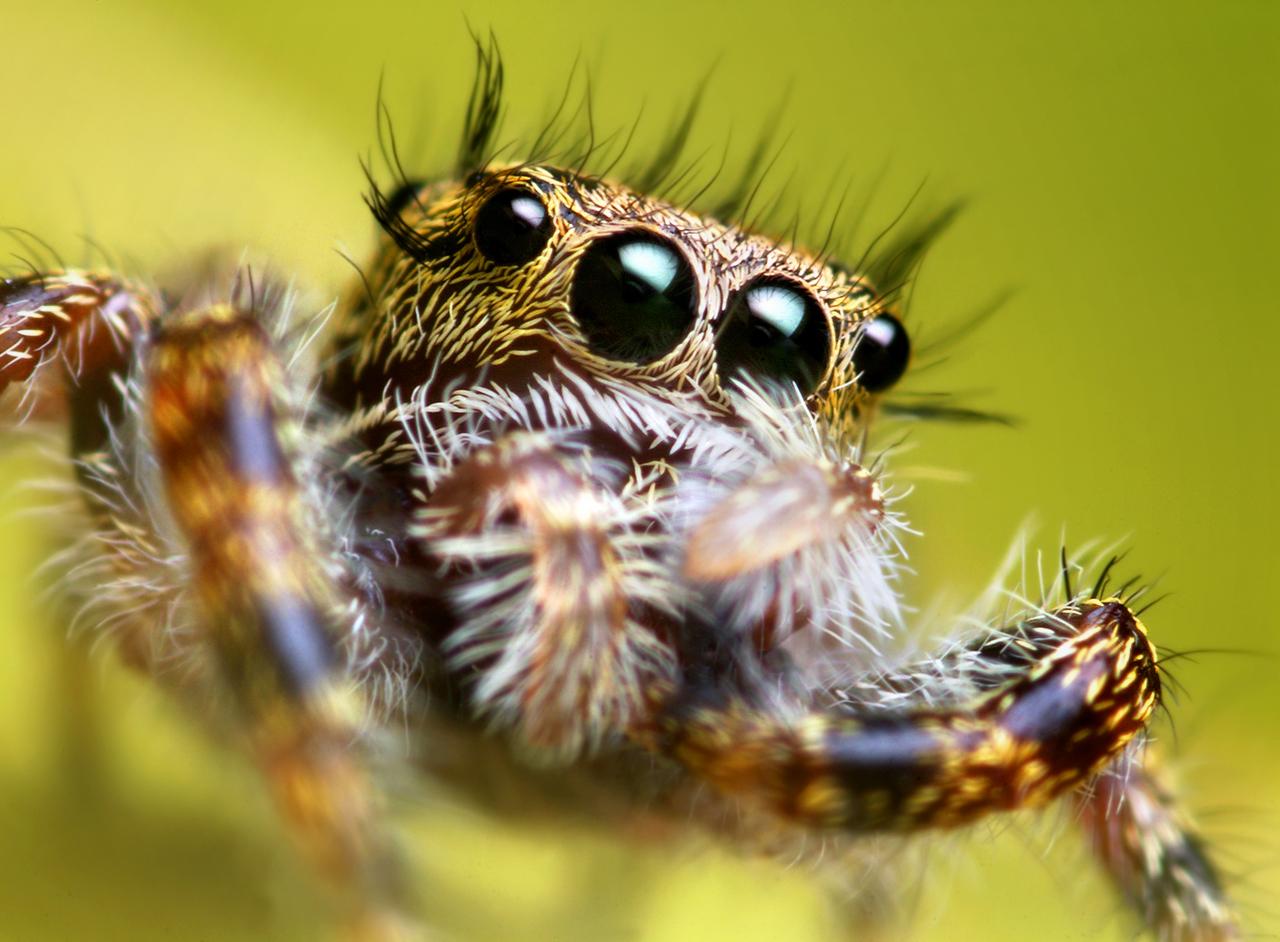 Új álomszakmám van, én is pókokat akarok ugrálni tanítani, mint a brit tudósok!