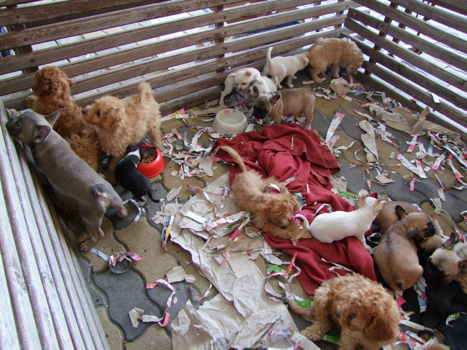 Minősített állatkínzás miatt indult eljárás a 25 kölyökkutyát kisteherautóba zsúfoló olasz férfi ellen