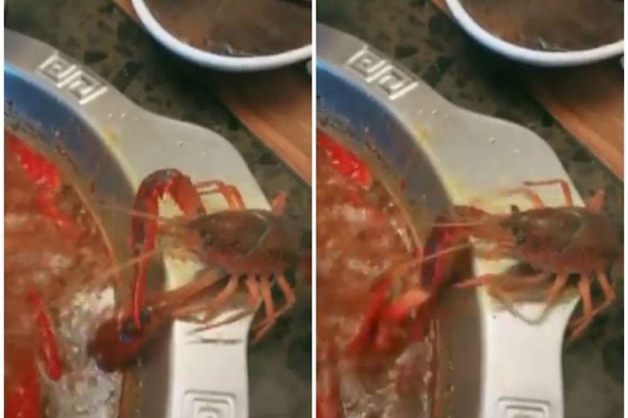 Amputálta saját ollóját a rák, hogy megmeneküljön a forró levesből