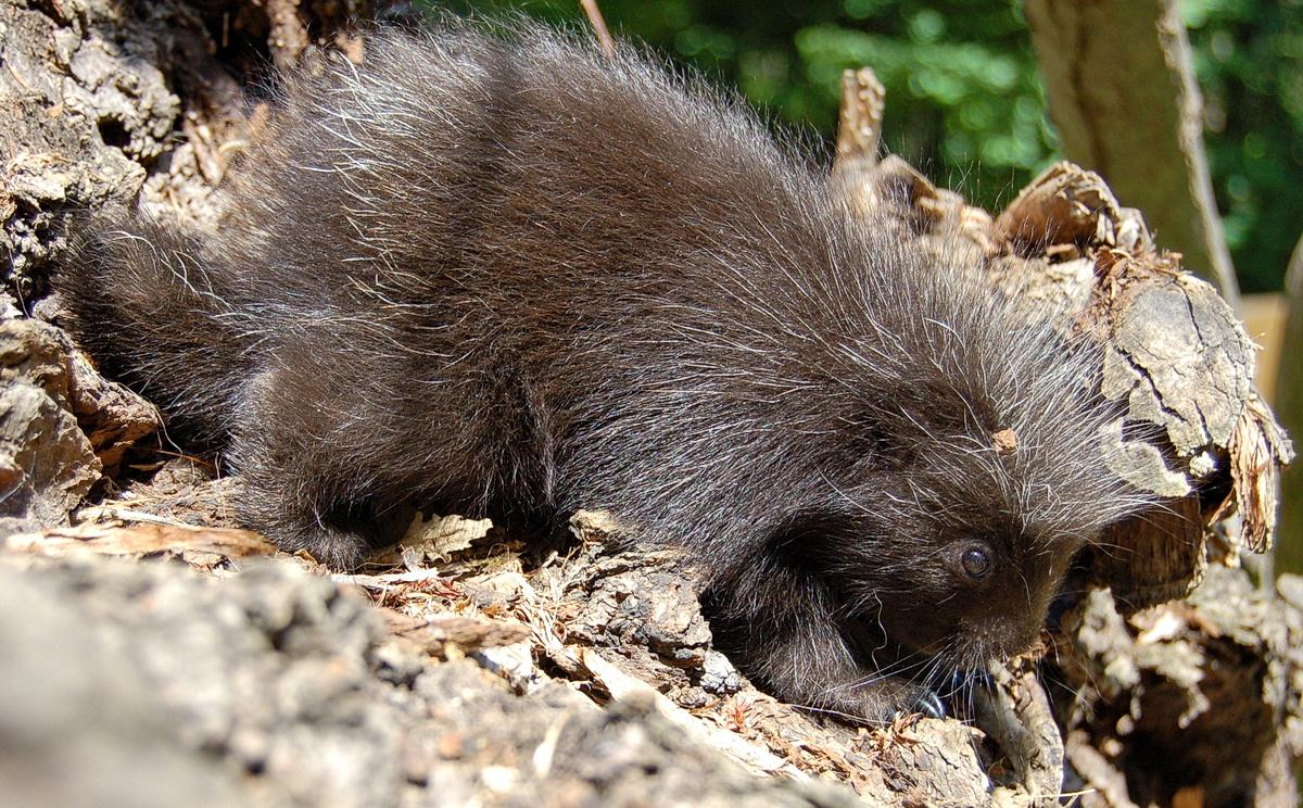 Kúszósül született a Miskolci Állatkertben
