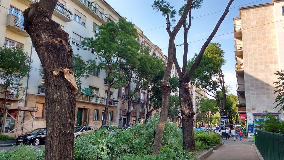 Az önkormányzat nem tudta előre, hogy csonkolás lesz a Pozsonyi úton