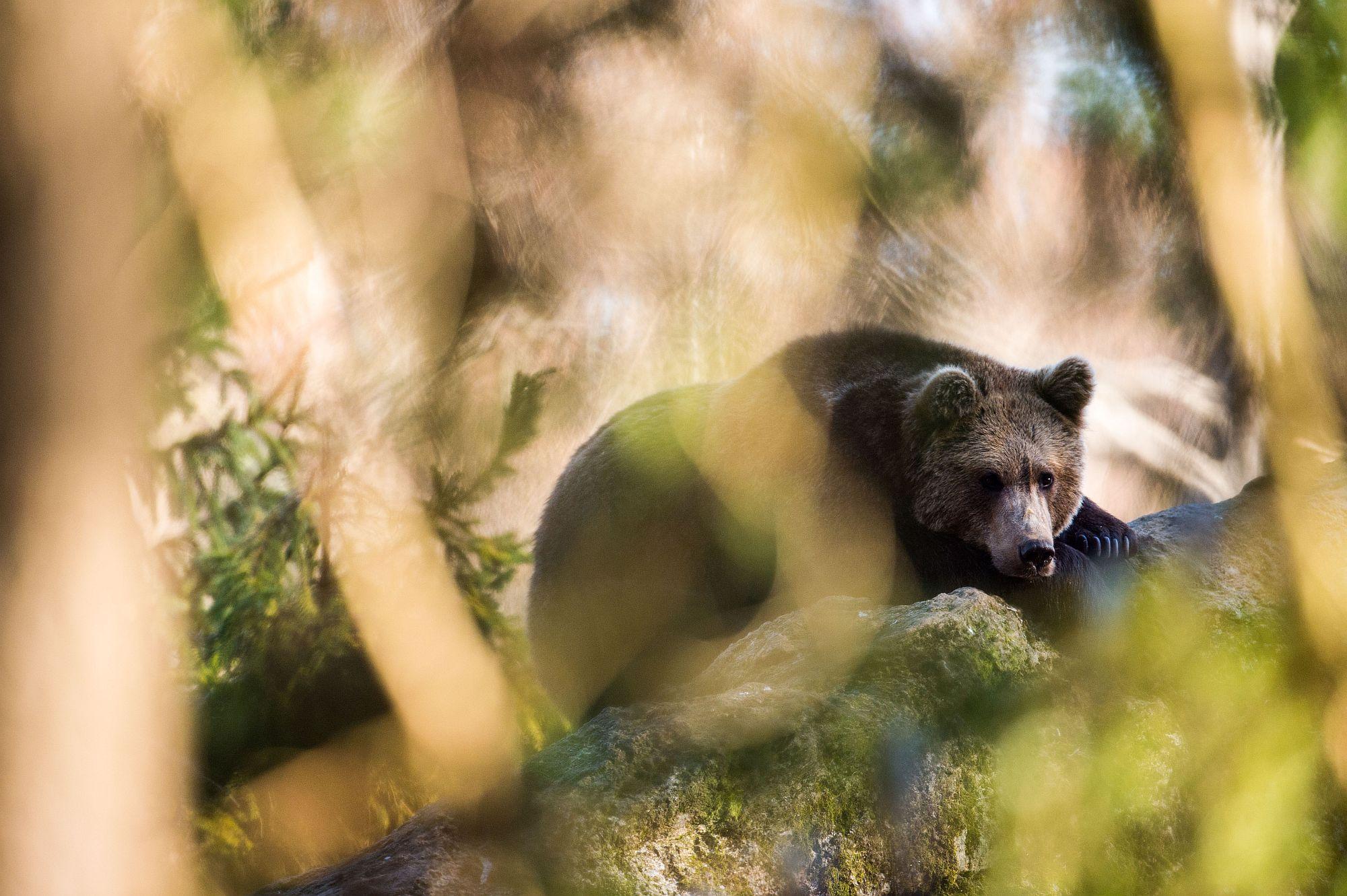 Tíz jótanács arra az esetre, ha szembejön egy medve