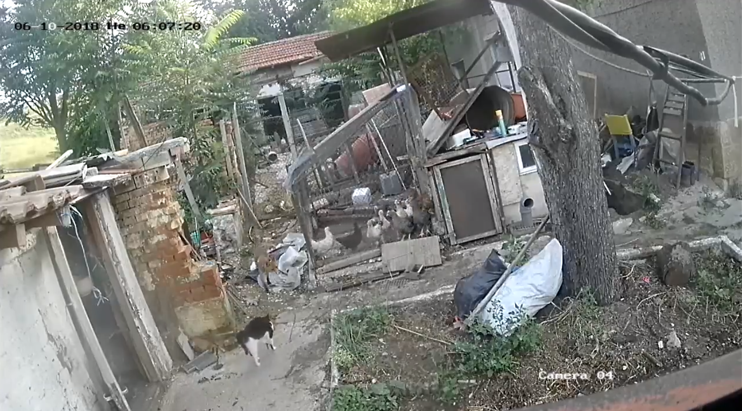 Tyúkot lopni indult a róka, de találkozott a Házőrző Macskával