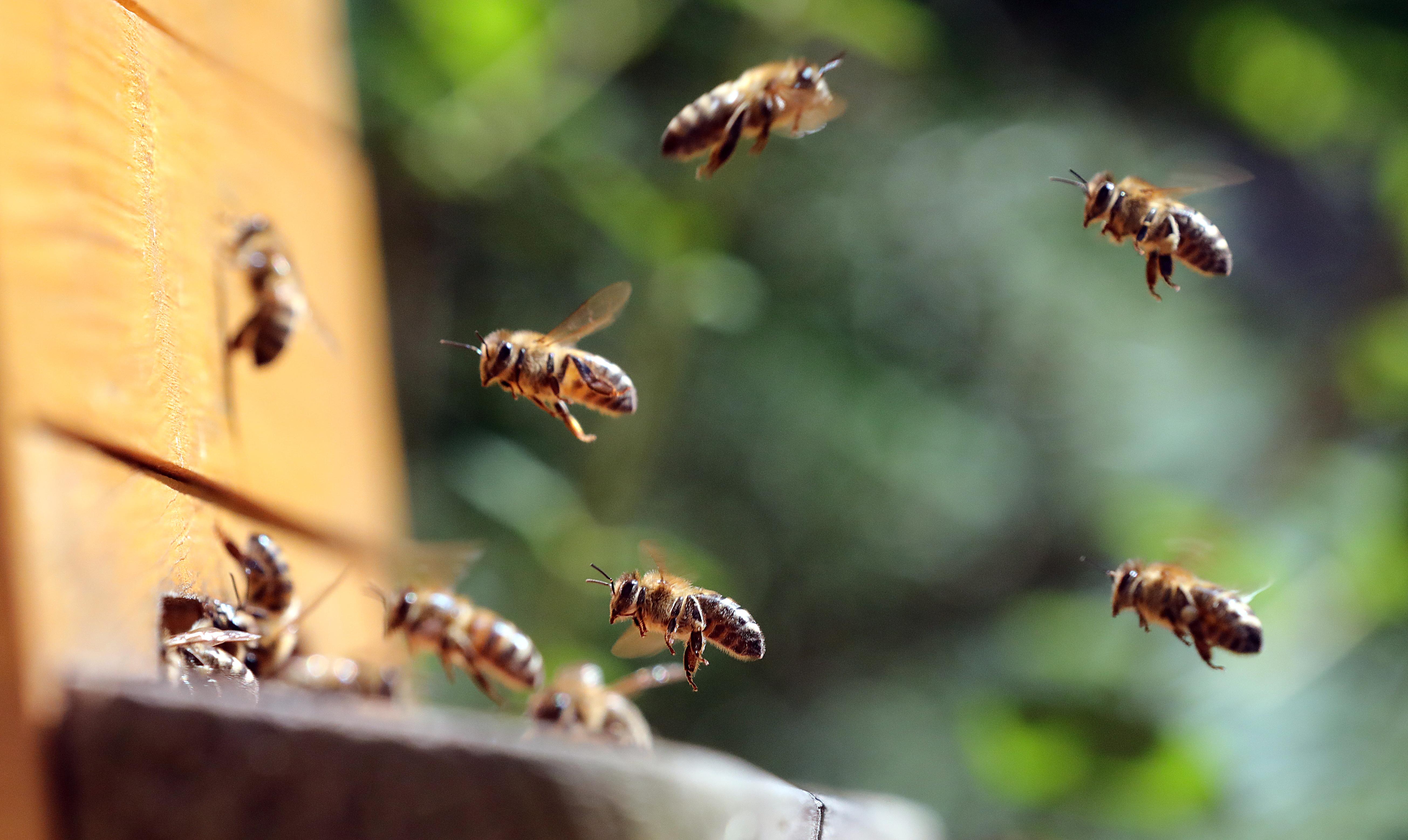 Olyan rohamos ütemben pusztulnak a rovarok, hogy még ebben az évszázadban összeomolhat az élővilág