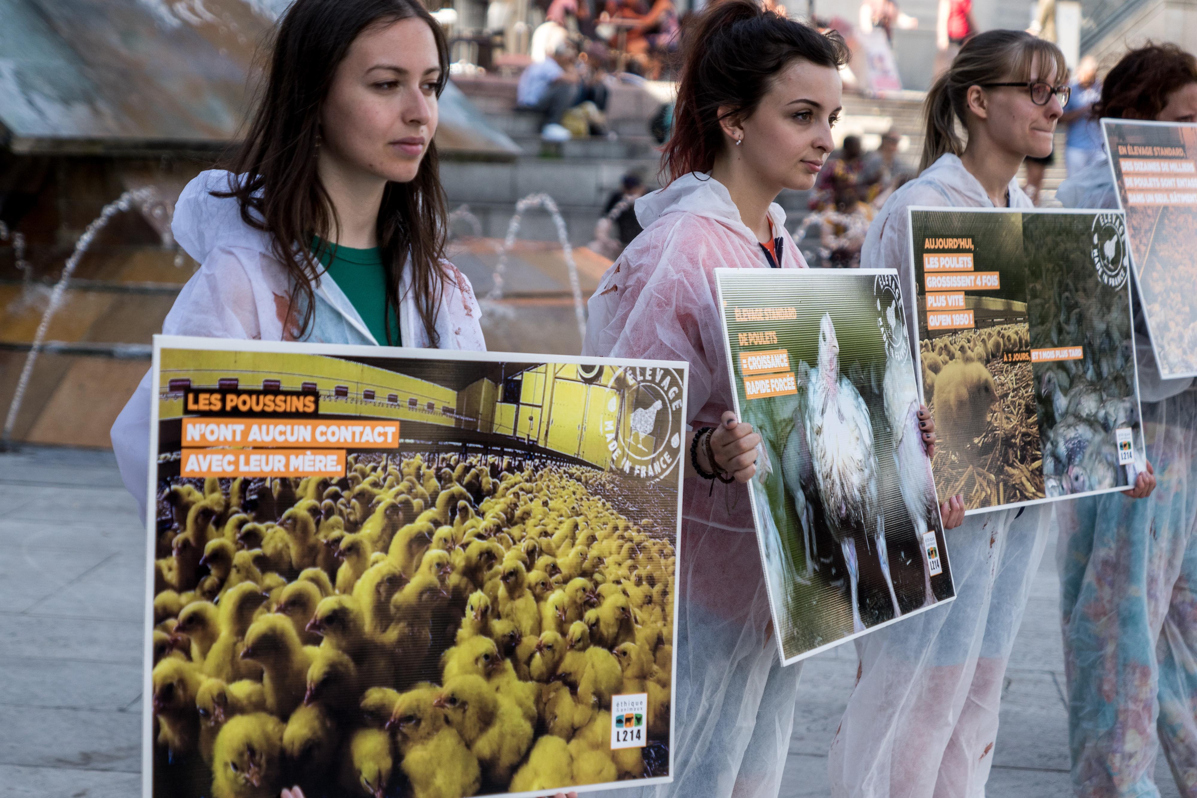 A militáns vegánok miatt a kormánytól kérnek segítséget a francia hentesek
