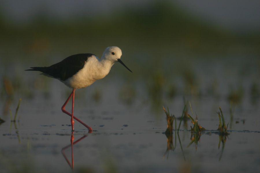 Eldőlt: 2019 madara a GÓLYATÖCS