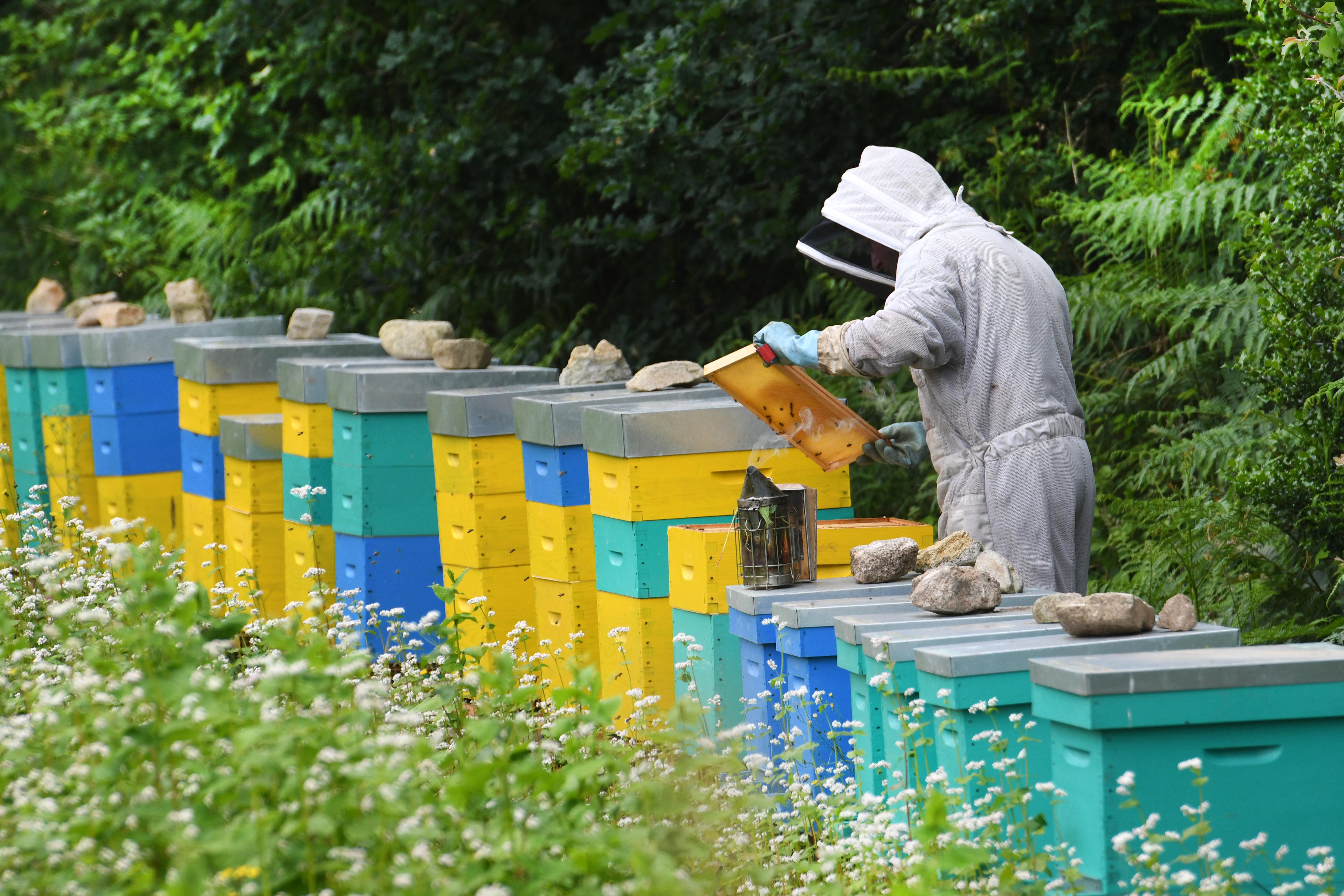 Hétszer kapnak idegmérget a magyar méhek egy szezonban