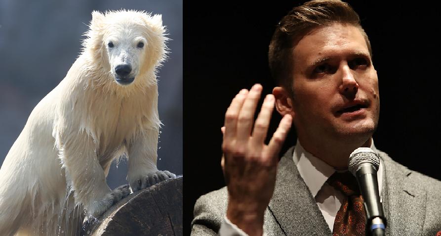 Fehér medvét és fehér fajvédőt láttak Izlandon