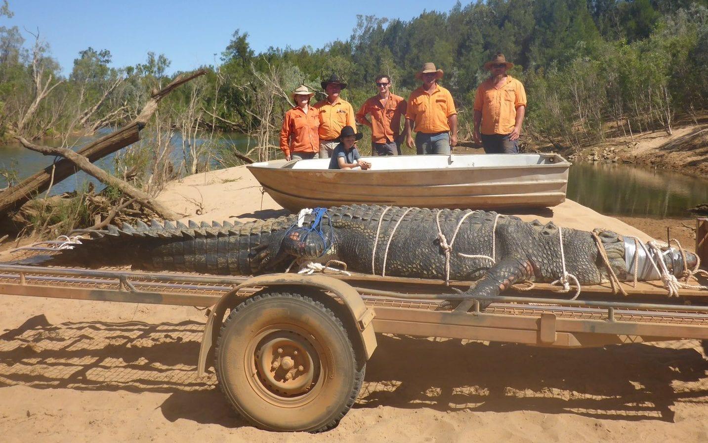 Ausztráliában elfogtak egy szépkorú problémás óriáskrokodilt