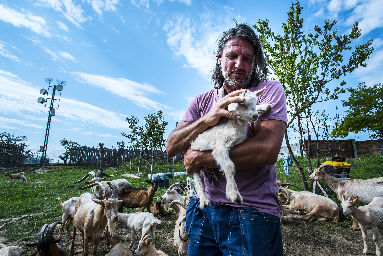 A fesztivál, ahol kecskék legelik tisztára a jógafalu helyszínét