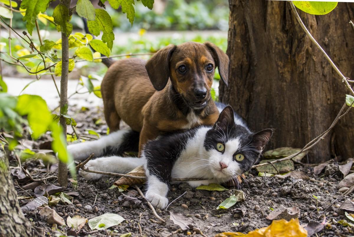 Nem szabad bedőlni a hisztériakeltésnek: a macskák és a kutyák remekül kijönnek egymással egy fedél alatt is