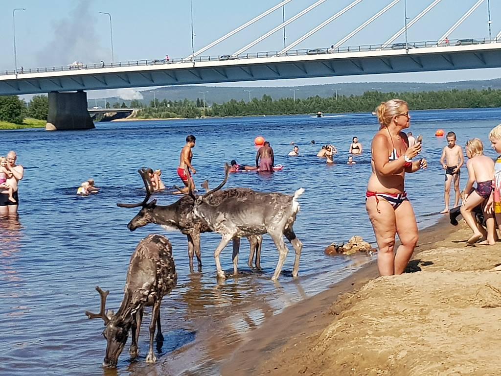 Akkora hőség van Lappföldön, hogy Semjén Zsoltnak snorkelszettben kéne rénszarvasra vadásznia