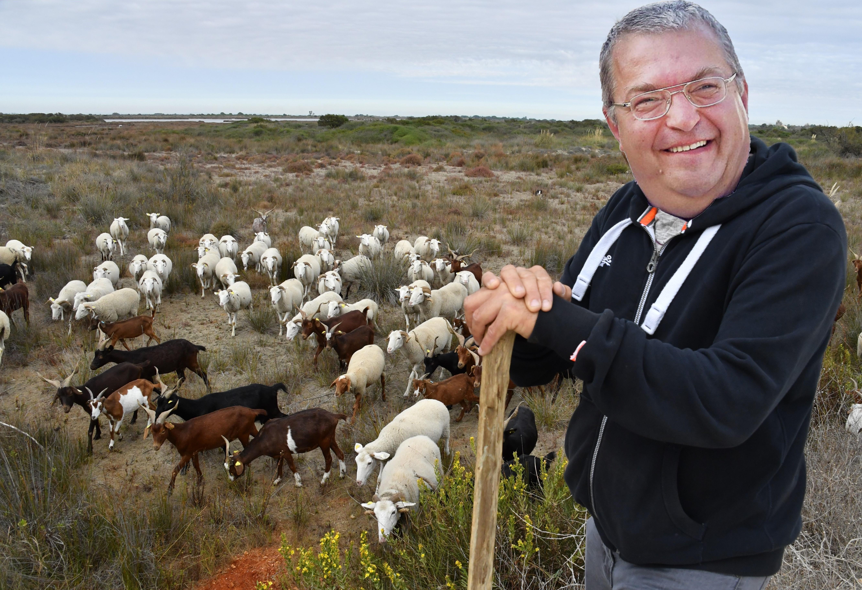 Lehet bármekkora az összeomlás, Simicska Lajos a kecskéiről nem hajlandó lemondani