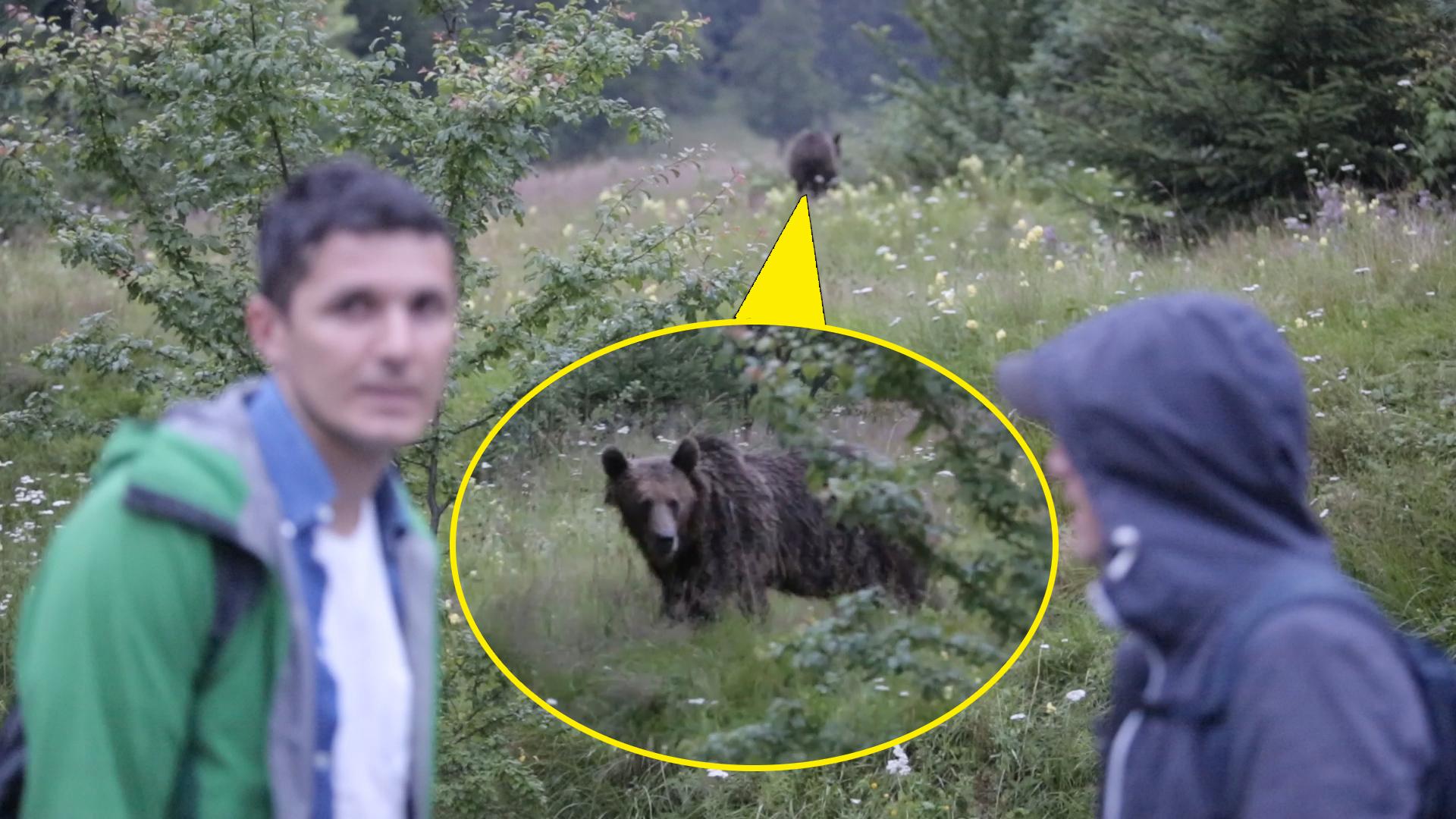 Lelőtték a tusványosi medvét, amelyik kifosztotta a gyermekotthon hűtőszekrényét