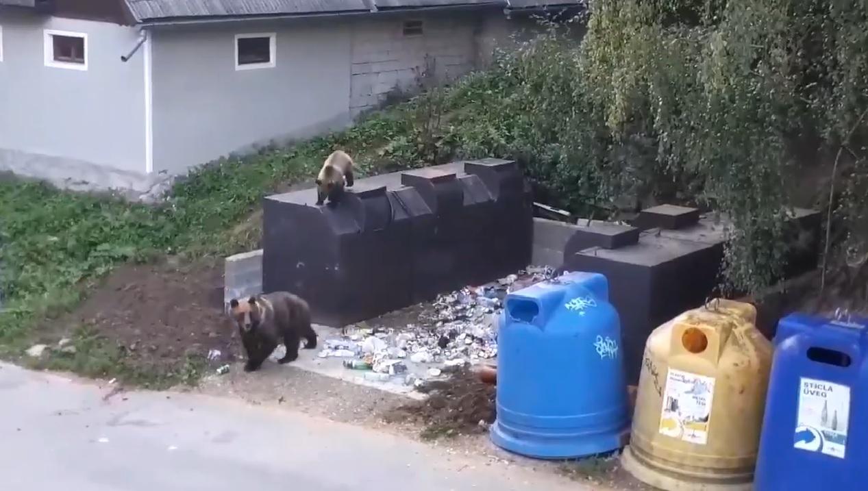 Románia elajándékozná a tusnádfürdői medvéket, de egyetlen európai ország sem akarja befogadni őket