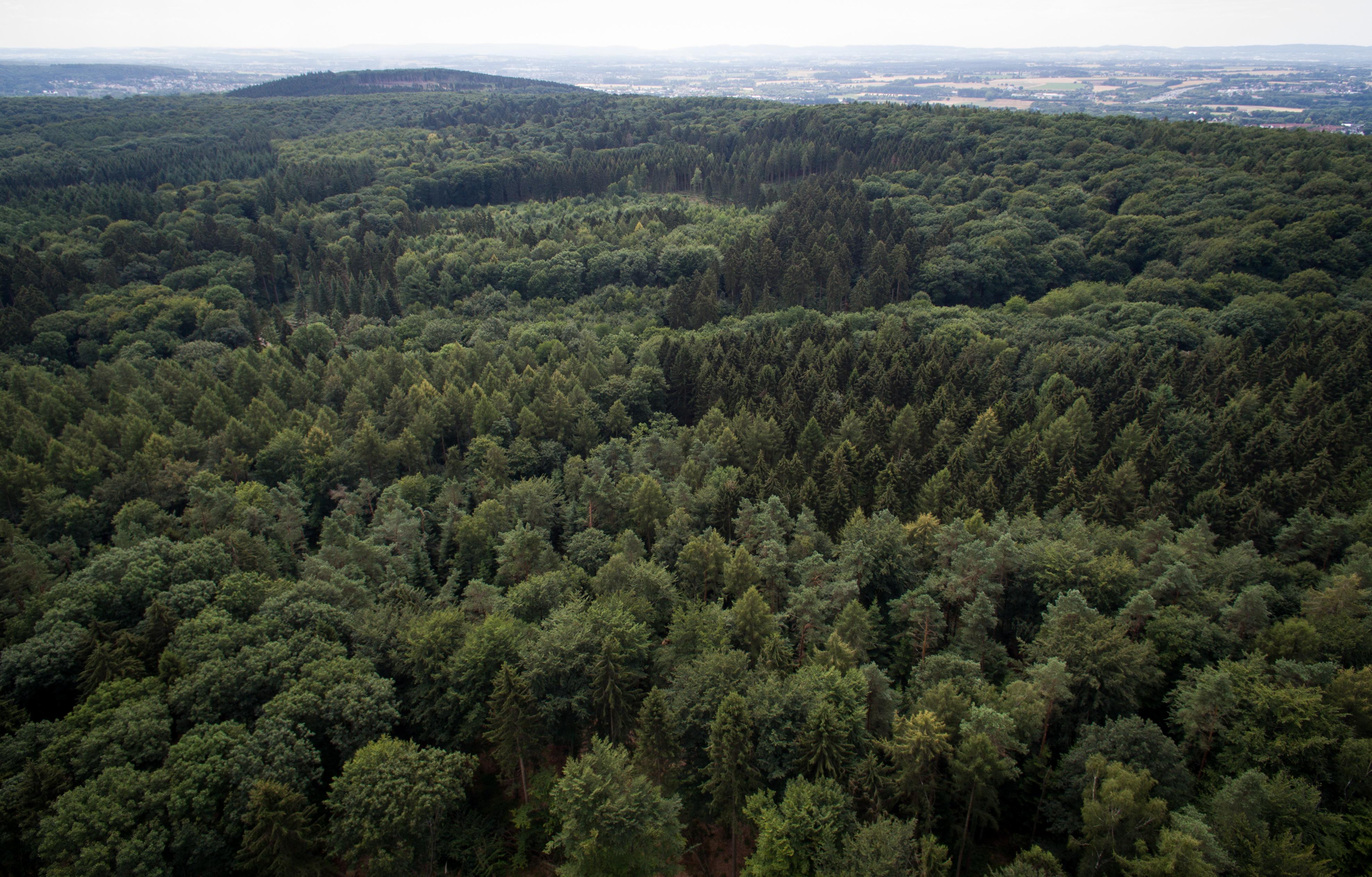 Hatalmas városi erdőket tervez az ENSZ a klímaváltozás megfékezésére