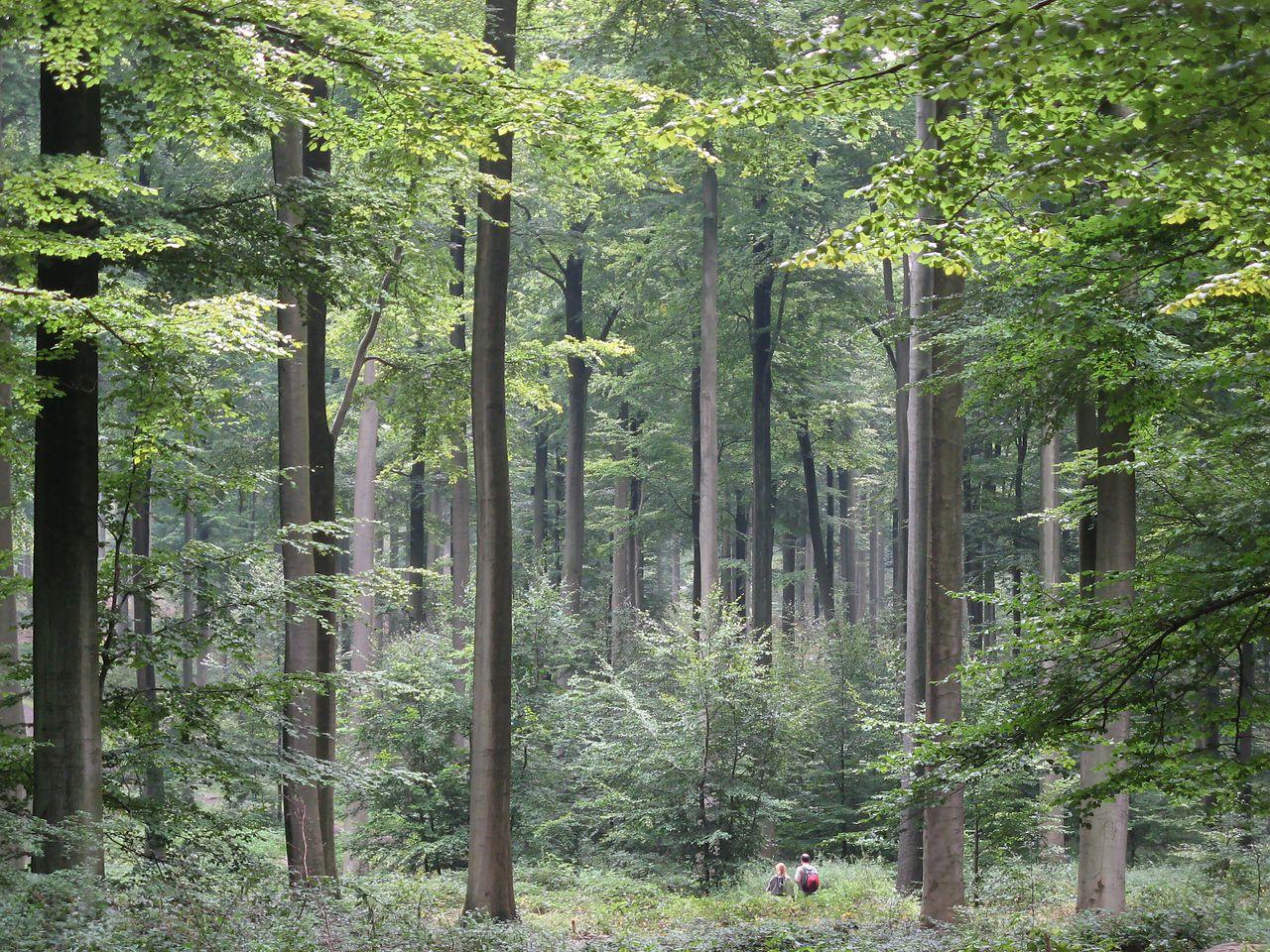 Egy német erdész azt mondja, a fák beszélgetnek, számolnak, barátkoznak, gondoskodnak az utódaikról és tanulnak is