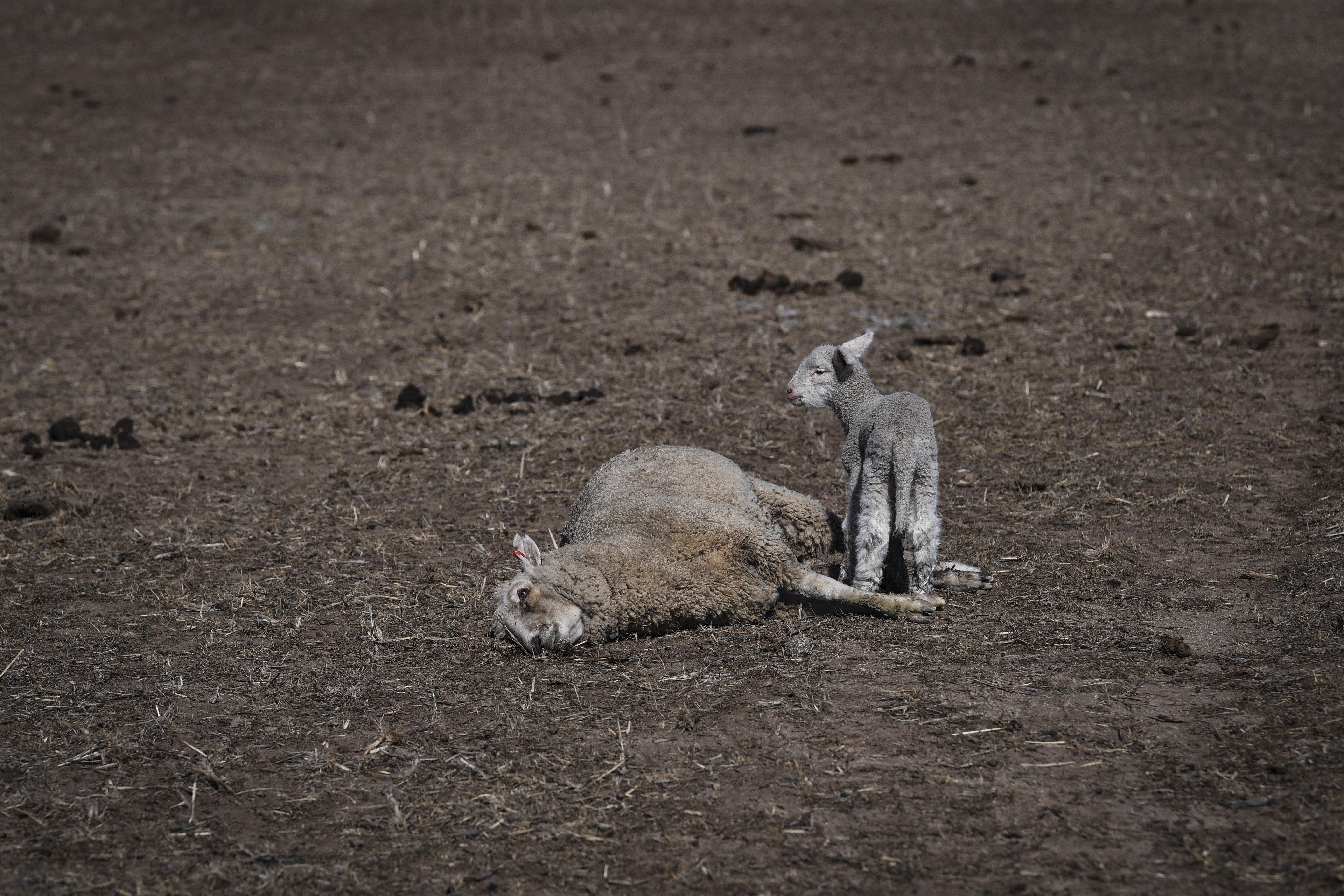 ENSZ: A természet pusztulása elleni célok közül egyet sem sikerült teljesítenie a világnak