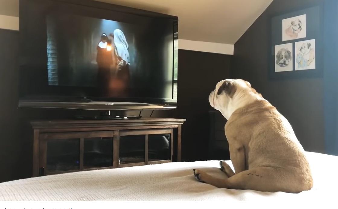 Túl sokkoló volt a Youtube-nak az egyik horrorfilm első trailere, az újat már egy bulldog is nyugodtan végig tudja nézni