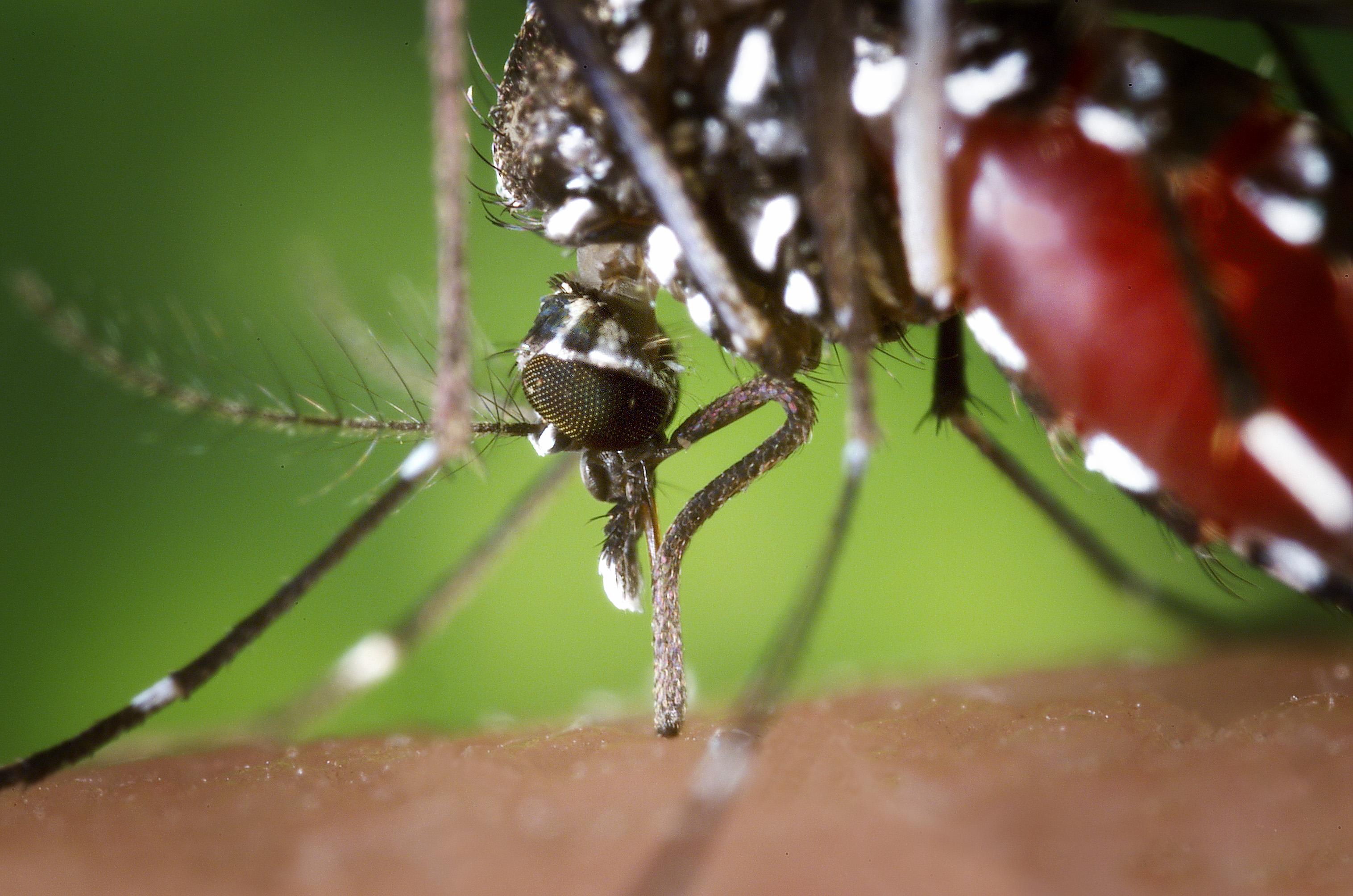 Idén már a harmadik ember halt meg egy ritka, szúnyogok által terjesztett betegségben az USA-ban