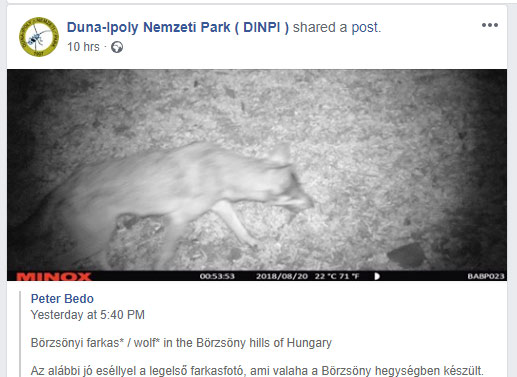 Már fotó is bizonyítja, hogy farkas járt a Börzsönyben
