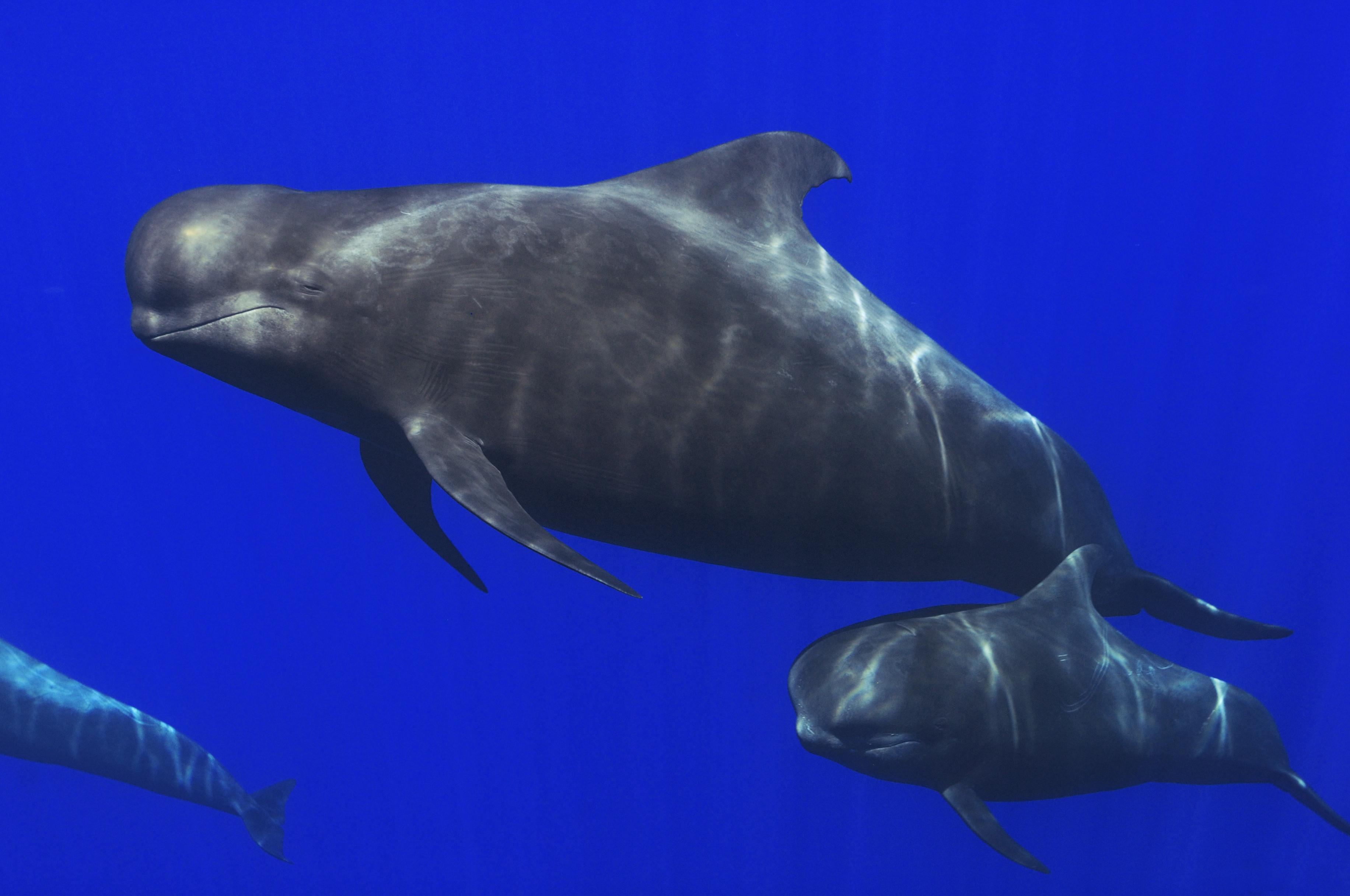 145 bálna vetődött partra Új-Zélandon, mind elpusztultak
