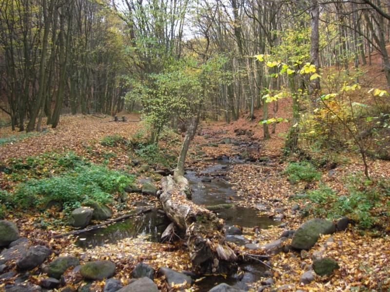 Az Agrárminisztérium visszavonta a Csarna-völgybe tervezett kisvasút engedélyét