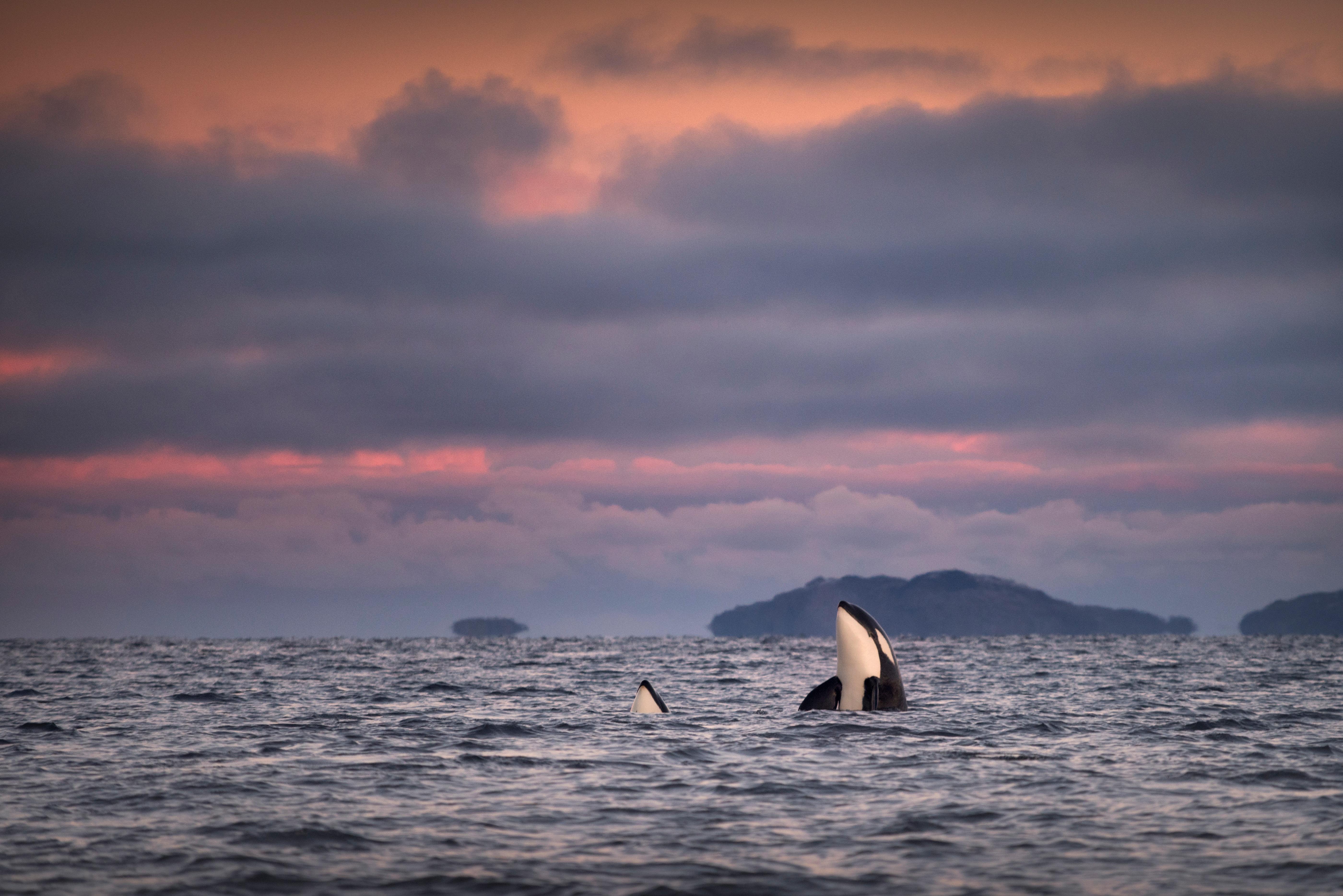 Harminc év után ismét kereskedelmi célú vadászatra indultak a japán bálnavadászok
