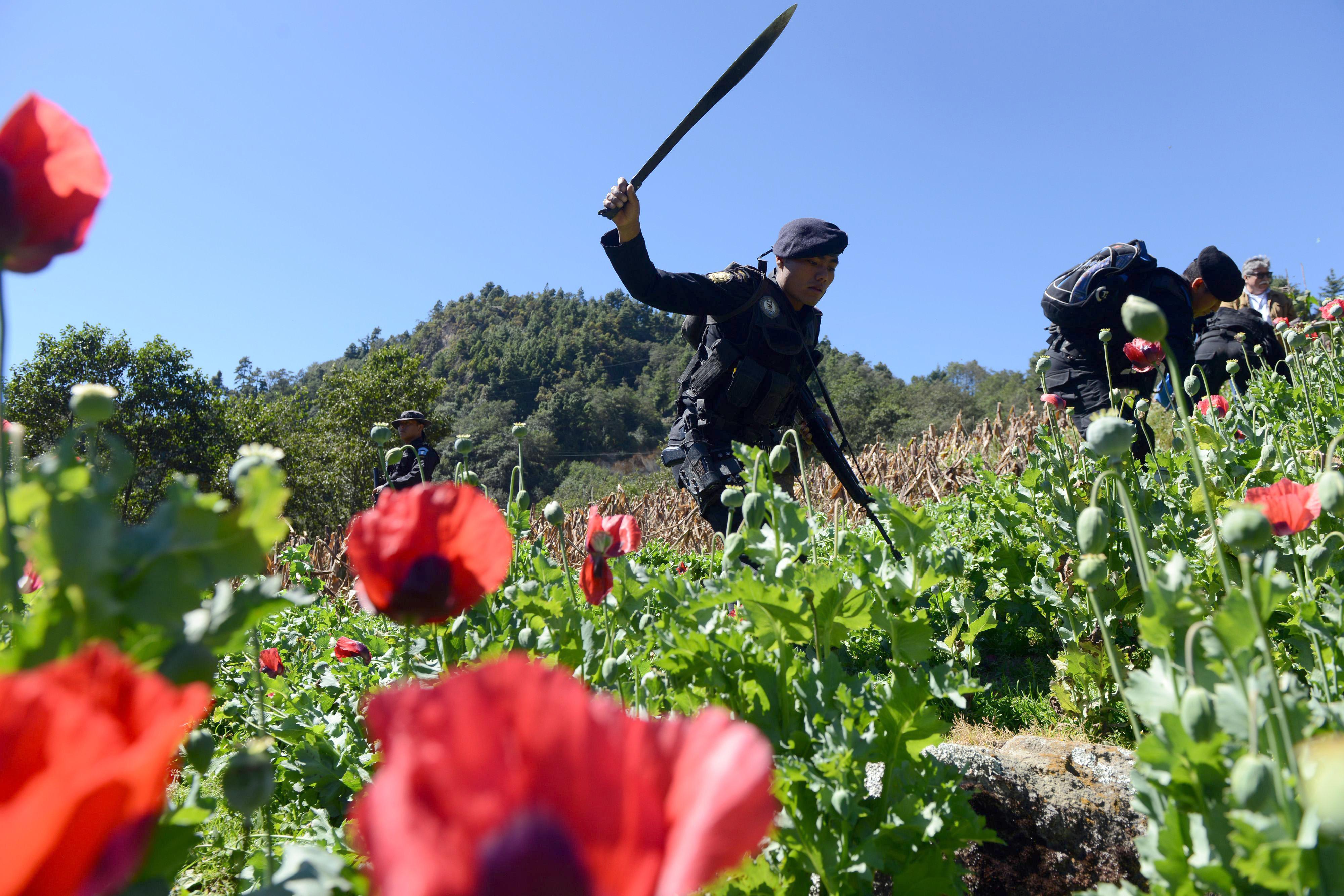 Az ópium legalizálásával fékezné meg az erőszakot a mexikói védelmi miniszter