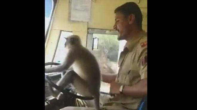 Felfüggesztik az indiai buszsofőrt, aki átadta a kormányt egy majomnak