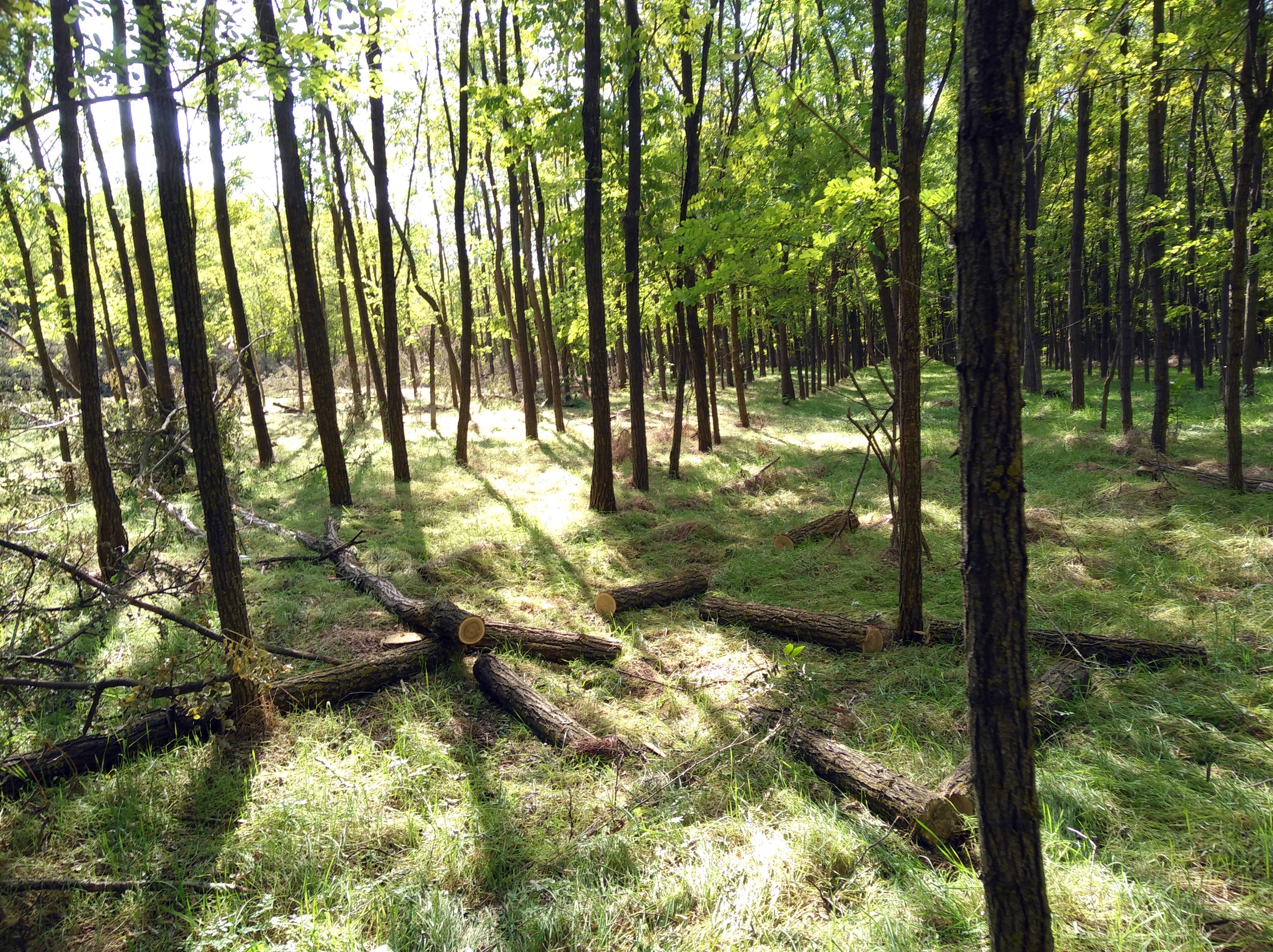 Egy tiszaalpári férfi azt mondta, az erdő az övé, és felfogadott három embert, hogy kivágják neki