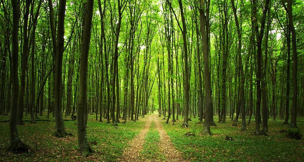 Miután megnézted ezt a filmet, többé nem tudsz majd ugyanúgy sétálni egy erdőben