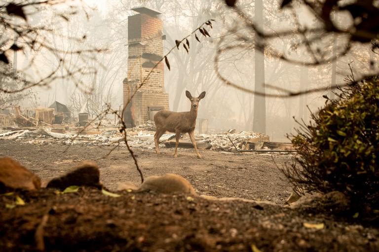 Kaliforniai tűzvész: Paradise városánál 14 halottat találtak