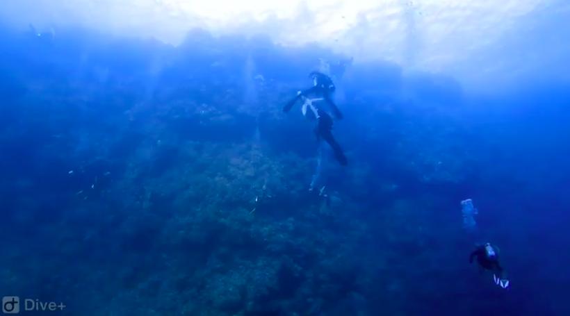 Így néz ki egy cápatámadás a többi búvár szemszögéből
